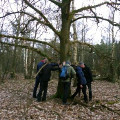 wichelroede lopen bij boom